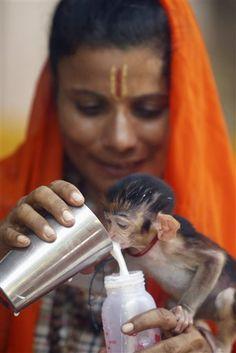 Sita Mata, a Sadhvi or Hindu holy woman, feeds a baby monkey named Geetanjali, in Jammu, India