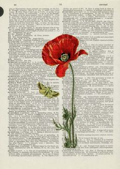 Vintage poppy artwork printed on a page from an old dictionary