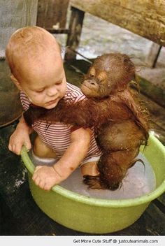 baby monkey bath washing kid tub water holding hugging cute animals wild wildlife species planet earth nature pics pictures photos images