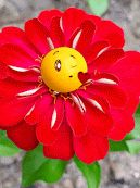The perfect Emoji Flowers YouAreAwesome Animated GIF for your conversation. Discover and Share the best GIFs on Tenor. Good Morning Flowers, Good Morning Gif, Good Morning Greetings, Good Morning Images, Good Morning Quotes, Friday Morning, Images Emoji, Bisous Gif, Gif Bonito