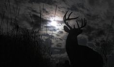 When Deer Hunting, Use Weather Patterns to Your Advantage