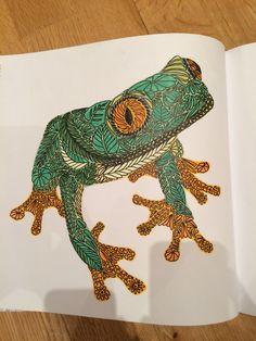 Frog - Millie Marotta