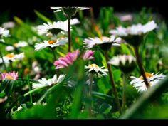 garden time-lapse
