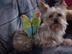 Pascha with Koko and Swiepie