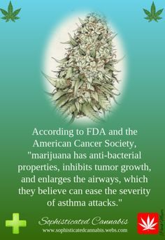 I have Asthma and I speak from experience, cannabis has helped me from having attacks far less frequently than anything else.