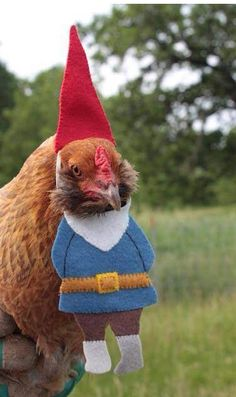 Knock knock Chicken gnome. Wait, I totally fucked that joke up.