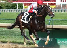 Bitumen (c, 2, Mineshaft--Kobla Cat, by Tale of the Cat), produced by an unracedhalf-sister to MGISW Quality Road (Elusive Quality), stamped himself as one to watch with this 'TDN Rising Star' performance at first asking. …