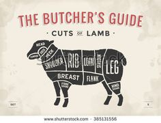 Cut of beef set. Poster Butcher diagram and scheme - Lamb. Vintage typographic hand-drawn. Vector illustration