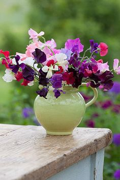 mixed sweet peas in a celadon pottery jug - courtesy of sarah raven