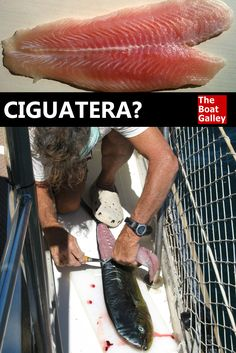 How much do you know about ciguatera poisoning? How prevalent is it? How serious is it? What you need to know before you eat another fish. via @TheBoatGalley