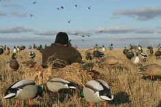 Duck Hunting - Adventure Ideaz