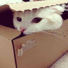 My favorite box...