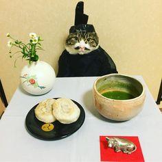 Maro(♂), cosplay cat. Dazaifu Tenmangu is a shrine which has deep association with a courtier-scholer, Michizane Sugawara. He is regarded as a deity of the study. Umegae moti (Bean paste-filled rice cake)