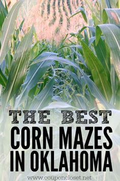 10 Corn Mazes in Oklahoma. Here are the The best Corn Mazes in Oklahoma that you are going to love to try this fall. Fall Vacations, Places In America, Crazy Mom, Road Trippin, Family Adventure, Travel And Leisure, Kid Friendly Meals, Wanderlust Travel, Wanderlust