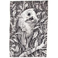 The Confused Owl  Adam Oehlers