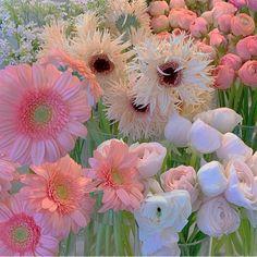 Spring Aesthetic, Nature Aesthetic, Aesthetic Themes, Flower Aesthetic, Aesthetic Images, Aesthetic Backgrounds, Aesthetic Wallpapers, Flowers Nature, Beautiful Flowers