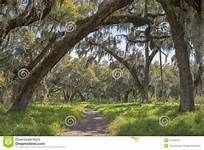 oak trees in descending perspective - Yahoo Image Search Results