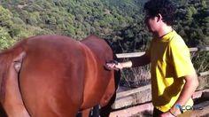 Consejos prácticos para cepillar un caballo #caballo #horse #animal #animales #animals