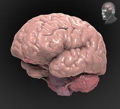 Traumatic Brain Injury A to Z - Interactive Brain