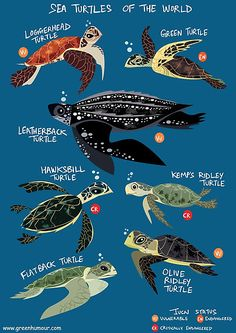 Illustrations of the 7 sea turtle species of the world • Also buy this artwork on wall prints, apparel, stickers, and more.