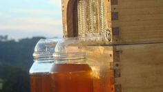 Espectacular sistema para cosechar la miel de colmenas sin molestar a las abejas
