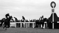 Grand National, Horse Racing, Rum, Equestrian, Horses, Crisp, Legends, Nail, Sport