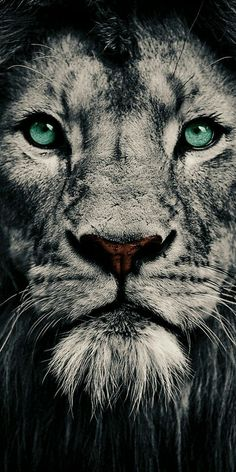 Face of a king! - The Effective Pictures We Offer You About animal wallpaper woodland A quality pict Lion Wallpaper Iphone, Animal Wallpaper, Wallpaper Backgrounds, Wallpaper Quotes, Disney Wallpaper, Girl Iphone Wallpaper, Lion Images, Lion Pictures, Free Images