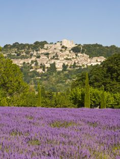 Lacoste and Lavender Fields, Luberon, Vaucluse Provence, France Photographic Print by Doug Pearson at Art.com