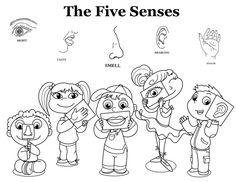 the five senses preschool sciencepreschool learningcoloring sheetsthe