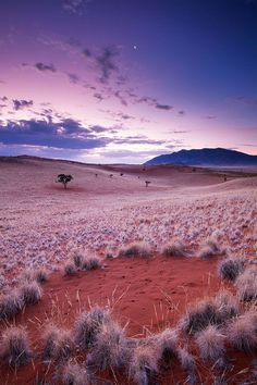 Shot of the famous Fairy circles- short taken in Wereldsend Farm, Namib Rand Reserve, Namibia.  by Hougaard Malan