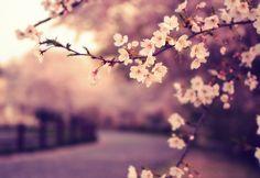 Las flores embellecen el camino de la vida.