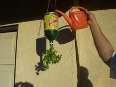 Upside-down planters have been pretty popular in recent years. You can use old soda bottles to make your own for herbs! via DIY Gadgets