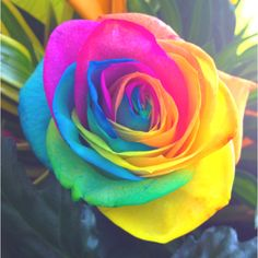 1000 Images About Flower Colors On Pinterest Climbing