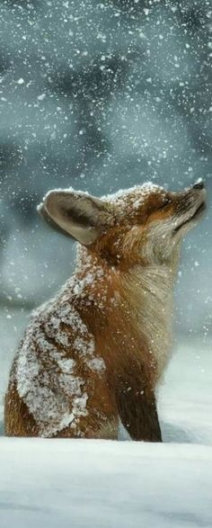 A photo edited with PicMonkey Seasons Poem, Seasons Of Life, Puppy Pictures, Farm Animals, Photo Editor, Puppies, Wallpaper, Winter, Dog Photos
