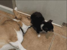 The corgi mama who can't baaaalieeeeve her pup pooted so badly. | 51 Corgi GIFs That Will Change Your Life