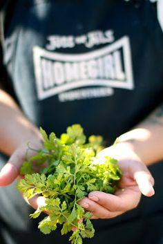freshly harvested cilantro.