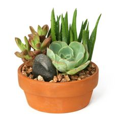 Lowe's multi succulent planter, in store on clearance for $4.49.  As of 9/25/15.