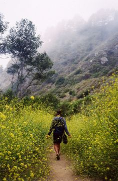 chaparrals:  ourwildways:  untitled by hello hand on Flickr.  This is in San Luis Obispo, more specifically I believe Montana De Oro, even more specific I think it's the Coon Creek Trail.