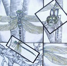 Insect Drawing using Composition and Framing - Conway High School Art Project