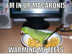 Sorry for the old meme, but this parrot is adorable!!!
