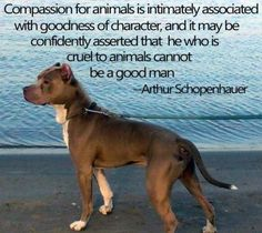 Compassion for animals is intimately associated with...