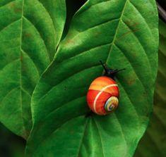 red snail - Buscar con Google