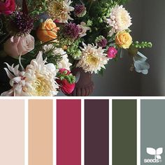 today's inspiration image for { flora palette } is by @wild_rubus ... thank you, Caroline, for another beautiful #SeedsColor photo share!