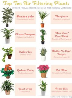 Top 10 Air Purifying Plants - always wanted a 'Mother In Law's tongue' plant :)