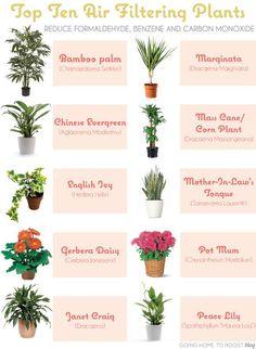 Echte planten (die weinig verzorging nodig hebben) om meer (schone) zuurstof in het kantoor te krijgen. En het staat leuk!