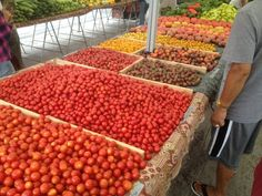 Thao's colorful tomato/cherry tomato varieties at Torrance Certified Farmers' Market