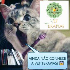 #animais #vetterapias #acupunturaveterinaria #fisioterapiaveterinaria #draflaviaoliva #gato #cachorro #esperança  #terapiasholisticas #cachorro #veterinariaemdomicilio