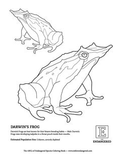 — E is for Endangered Free Coloring Pages, Darwin, Creative, Animals, Art, Frogs, Free Colouring Pages, Animales, Art Background