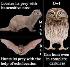 Nocturnal animals owls, bats, minks