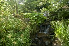Waterfall with Rodgersia | Flickr - Photo Sharing!